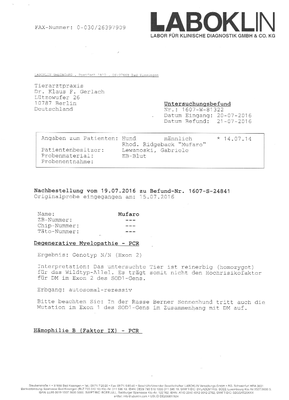 JME Untersuchung - Rhodesian Ridgeback - Mufaro - Zwinger Sahwira - Berlin - Seite 1