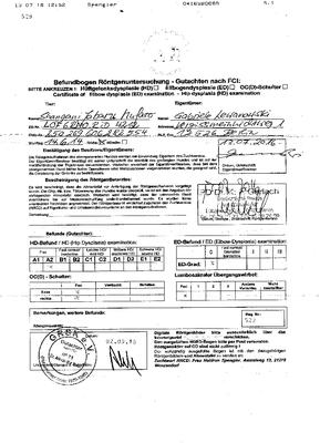 Röntgenuntersuchung - Rhodesian Ridgeback - Mufaro - Zwinger Sahwira - Berlin