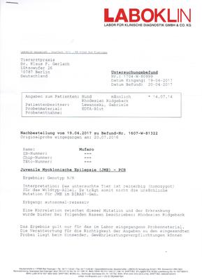 DM Untersuchung - Rhodesian Ridgeback - Mufaro - Zwinger Sahwira - Berlin