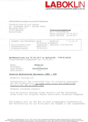 DM Untersuchung - Shangani Madahiro - Rhodesian Ridgeback - Sahwira