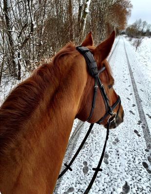 .... und natürlich Ausreiten... egal ob im Winter