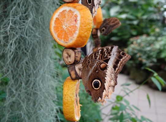 Schmetterling im Palmengarten Frankfurt © dokubild.de / Klaus Leitzbach