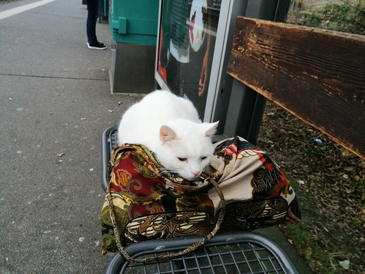 U-Bahn Katze Sindband © Mary Pins/frankfurtphoto