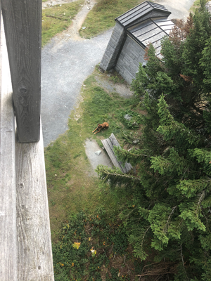 Nala wartet, während wir auf einen Turm steigen
