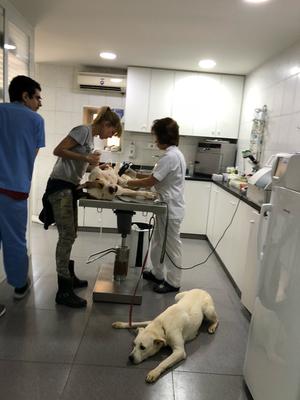 Kastrationen von Tierheimhunden übernommen von unserem Verein dank Ihrer Spenden.