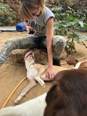 Bilder der Hunde sind wichtig um Besucher ins Tierheim zu locken und somit Adoptionen zu  ermöglichen