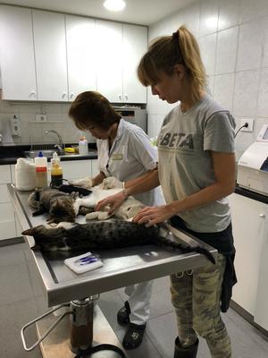Auch wenn wir uns derzeit mit dem Verein nur um Hunde kümmern, helfen wir natürlich gerne bei den Vorbereitungen für die anstehenden Kastrationen der Katzen mit.