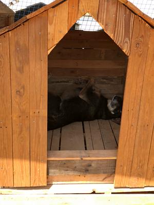 Es gibt neue Hundehütten, allerdings sind diese dauerbelegt