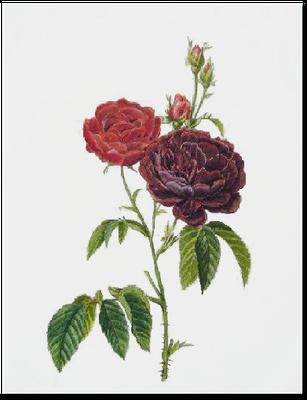 ボタニカルアート薔薇の絵