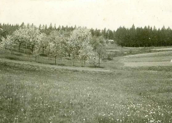 Der Obstgarten in der Dell im Jahr 1930