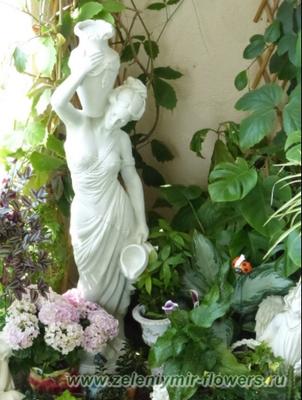 купить комнатные растения миллерово