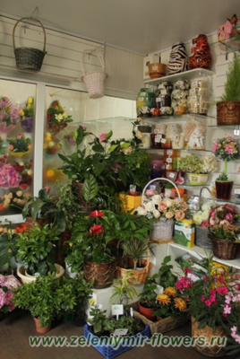 купить комнатные растения казанская