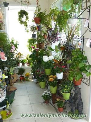 купить комнатные растения новочеркасск