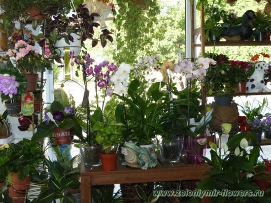 купить комнатные растения боковская