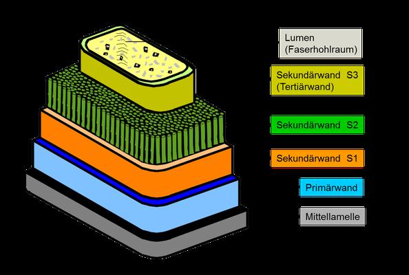 Aufbau einer Faser