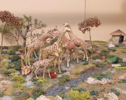 Giraffen am Wasser