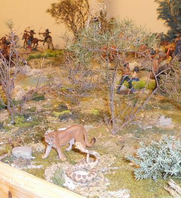 Kampf zwischen Puma und Klapperschlange