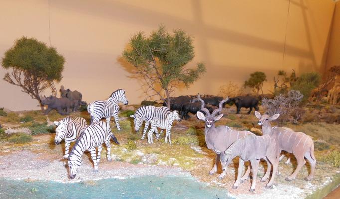 Zebras und Kudus