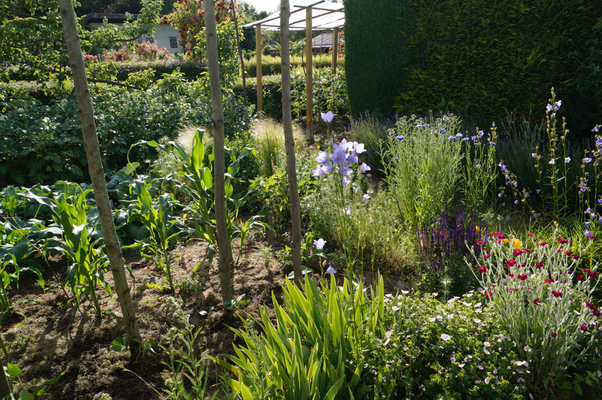 Gemüsebeet Bauerngarten mit Stangenbohnen , Ziermais u.a.