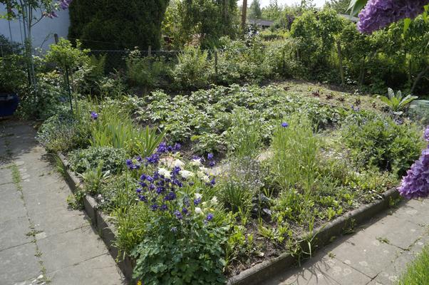 Bauerngarten- Kartoffelbeet und Blumenstauden
