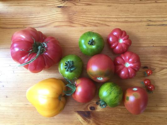 Schlesiche Himbeere, Honigdüßer Erlöser, Smaragdapfel, Olirose, Kleeblatt von Togo