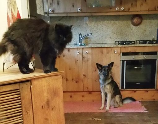 Jeannie versteht sich mit Katzen