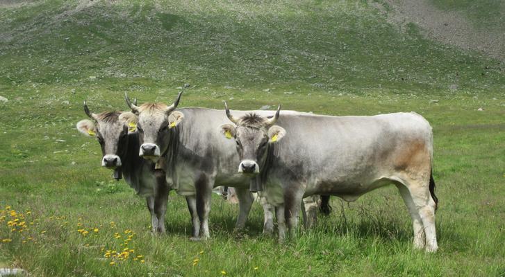 Seeberalm Hinterpasseier Südtirol von SIMON GUFLER aus Moos in Passeier, Südtirol