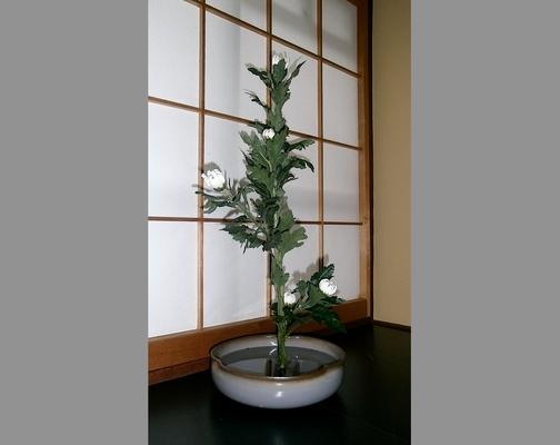 水谷雅由 菊
