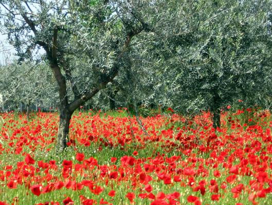 Aquarell Malkurs Provence