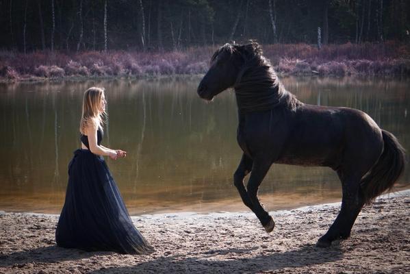 steigendes schwarzes Pferd