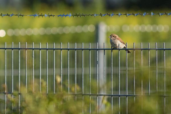 Wenn man Glück hat, erwischt man auch sonst eher scheue Vögel in besserem...