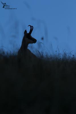 Kurz nach Sonnenaufgang wirkt dieses Bild im Schatten des Hangs wie ein Foto zur Blauen Stunde