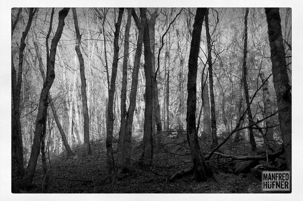 Eichenwald im Wangental