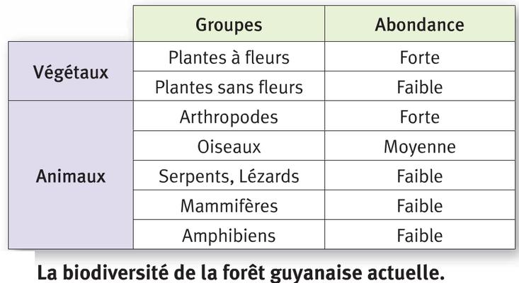 Biodiversité de la foret guyanaise actuelle