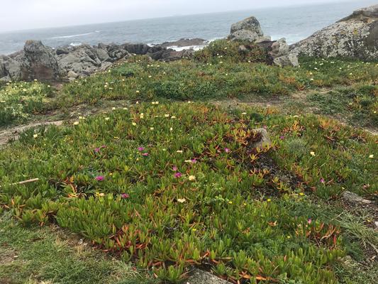 an der Küste blühen schon Blumen