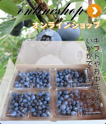 ブルーベリー生果、冷凍ブルーベリーのネット通販