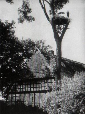 Buhrmester Nr. 37 um 1935