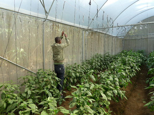 Together we build greenhouses - nakupenda afrika
