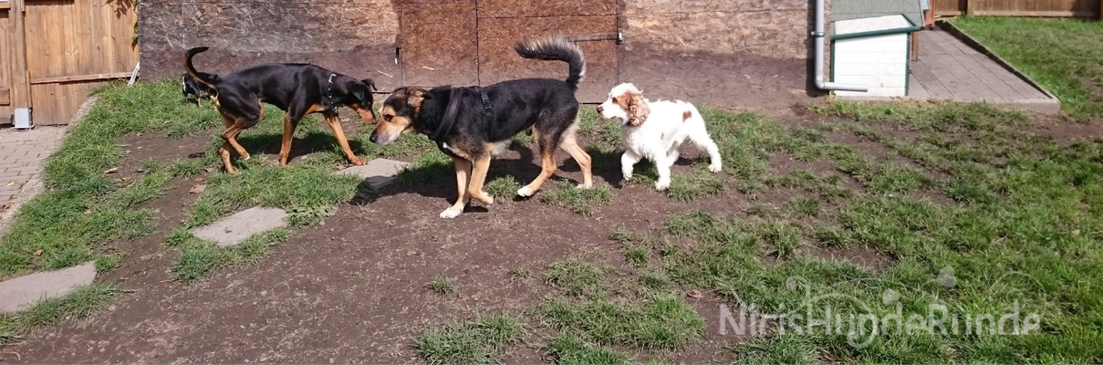 Shira, Gustav & Henry