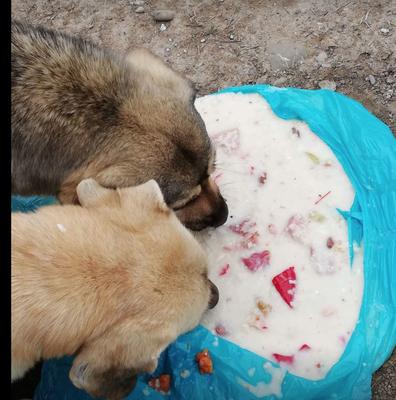 fütterung der Straßenhunde
