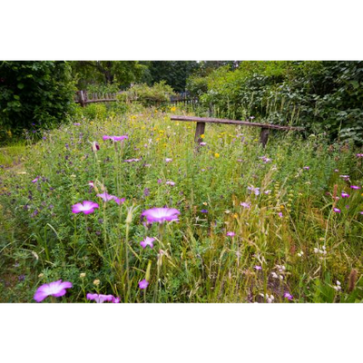 Naturnaher Garten. Foto: NABU/Sebastian Hennigs