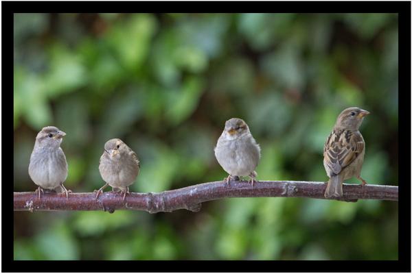 4 oiseaux sur une branche