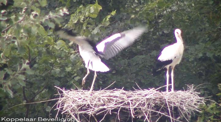 19 juli: testvluchtjes in het nest