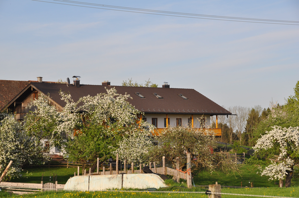 strahlt der Obstgarten jetzt wieder in frischem Blütenglanz.