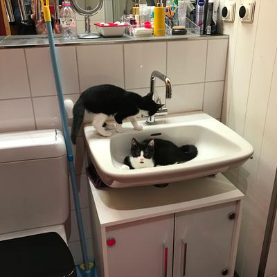 so ein ausflug ins haus kann schon mal im waschbecken enden