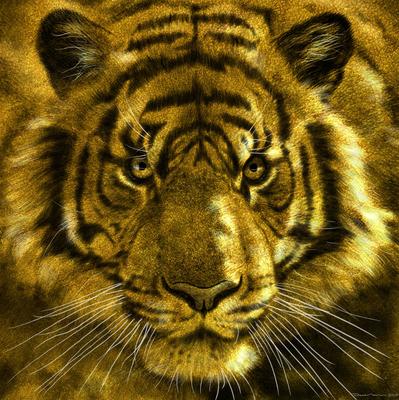 Tiger! Studie.