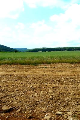 Hier sieht man die Oberfläche mit den Steinen im Feld