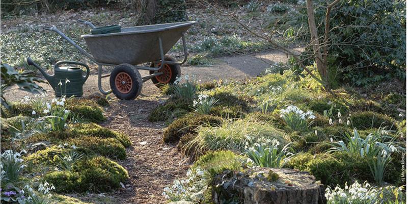 Gartenfotografie von Marion Nickig