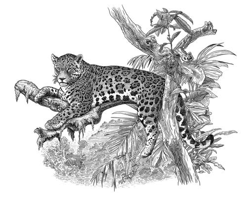 Benjamin von Eckartsberg - Illustration für IKACoffe Verpackung - Kunde: G.C. Breiger