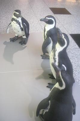 Pinguin-Dummy, lebensgroß